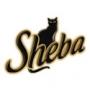 Шеба (Sheba Pleasure)